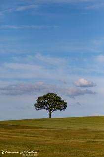journey tree 1