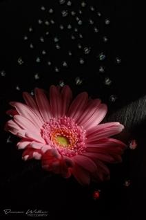 Pink Flower-3