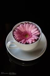 Pink Flower-4