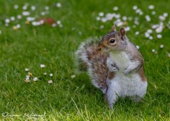 squirrel 16