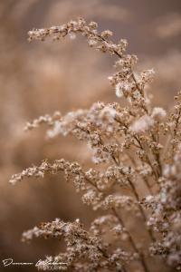 Duncan Walker Photography - Winterbourne