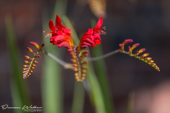 Duncan Walker Photography - Shakespeare Garden